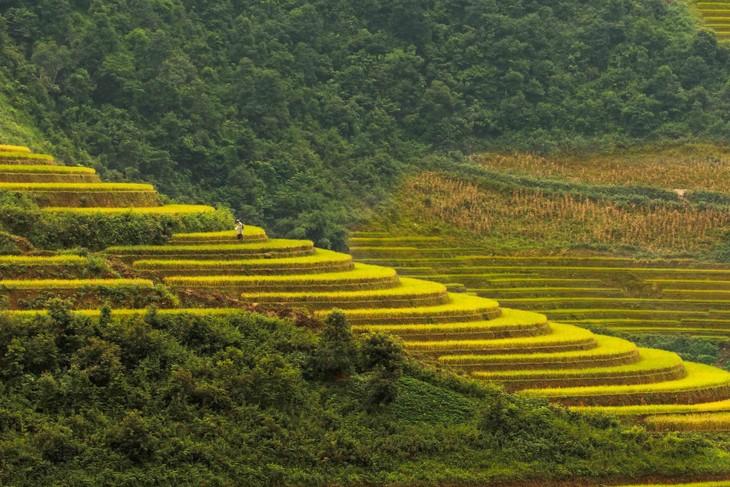 Harvest time in Mu Cang Chai - ảnh 2