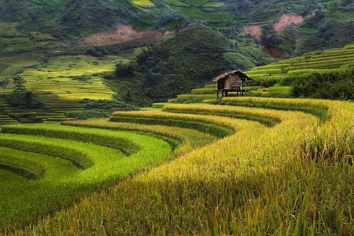Harvest time in Mu Cang Chai - ảnh 7
