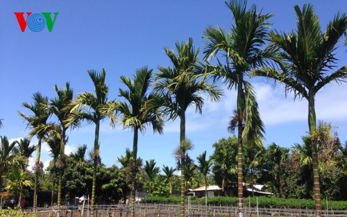 Southern-style Vietnamese gardens in Hawaii, US - ảnh 1