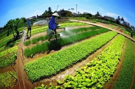 Tra Que village among top 10 destinations in Vietnam  - ảnh 1