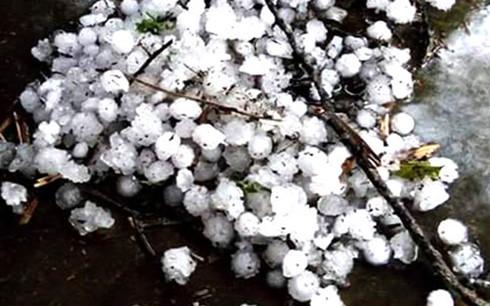 Tuyen Quang resolves hailstorm's consequences - ảnh 1
