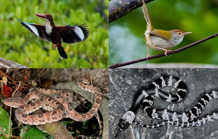 Ba Mun island - a paradise for wild animals - ảnh 2