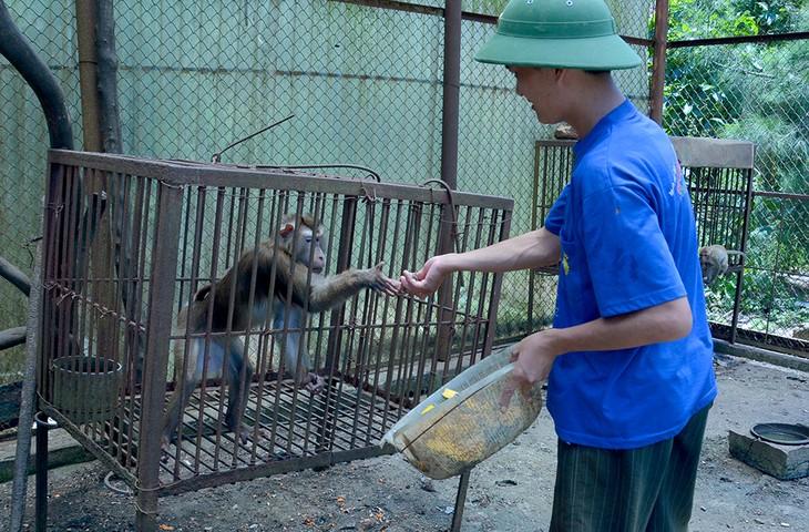 Ba Mun island - a paradise for wild animals - ảnh 3