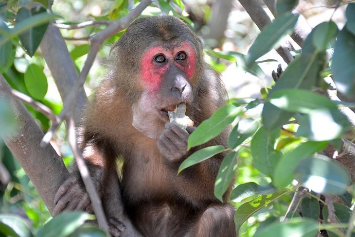 Ba Mun island - a paradise for wild animals - ảnh 4