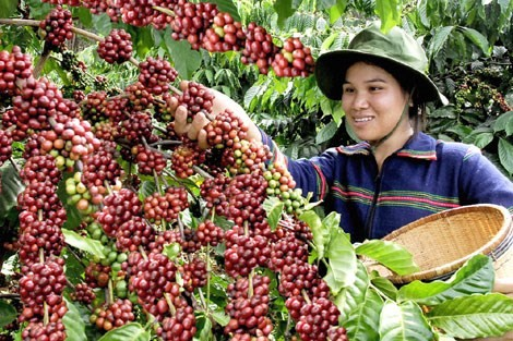 Vietnam Coffee Day to be held in December - ảnh 1