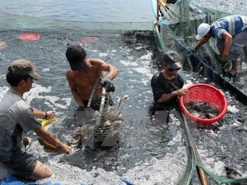 Aquatic product exports expected to grow 8 percent  - ảnh 1