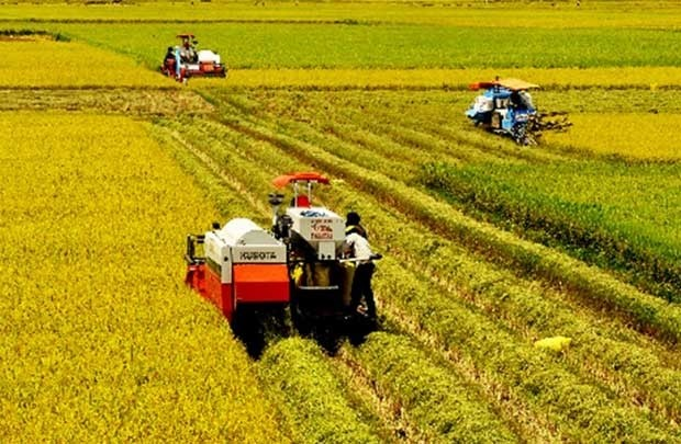 Agricultural restructuring be accompanied by appropriate growth model - ảnh 1
