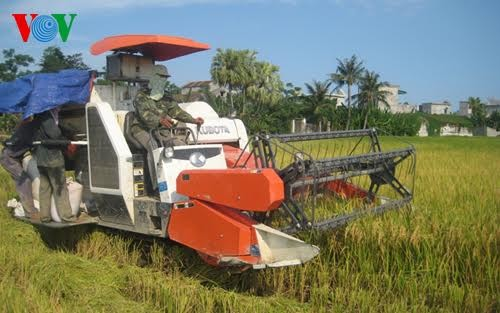 Accelerating agricultural restructuring  - ảnh 1