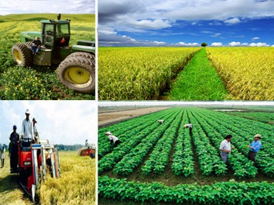 New rural development and agricultural restructuring - ảnh 1