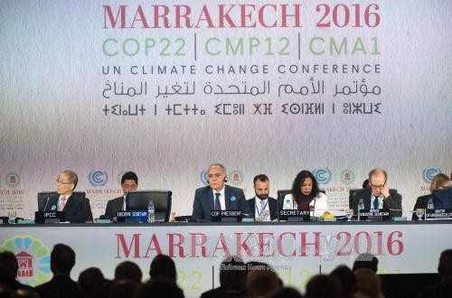 COP22: Turning words into action - ảnh 1