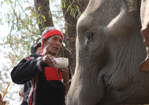 M'nong elephant worship  - ảnh 1