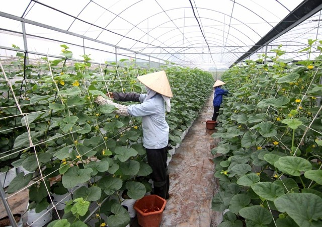 Science and tech researches promoted for new-style rural development  - ảnh 1