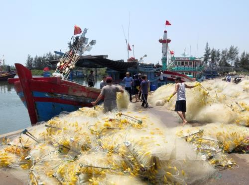 Da Nang works to increase traceability of seafood products - ảnh 1