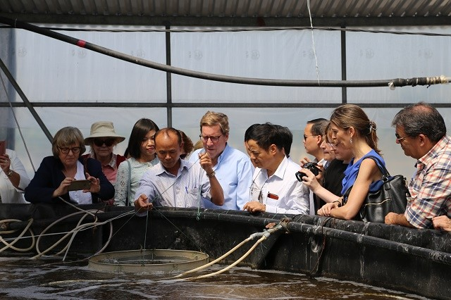 EP delegation works with Hai Phong city on IUU fishing - ảnh 2