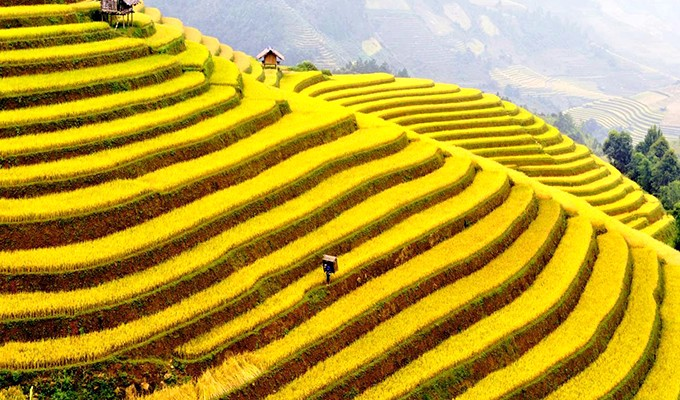 Hoang Su Phi terraced fields, masterpieces of minority groups - ảnh 3