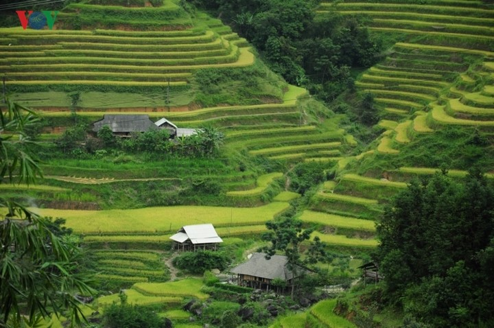Hoang Su Phi terraced fields, masterpieces of minority groups - ảnh 1