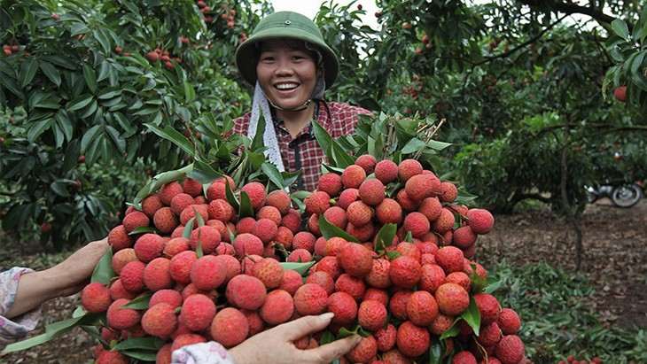 Link with farmers needs to be strengthened - ảnh 1