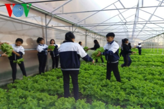 Lam Dong students practice high-tech agriculture - ảnh 1
