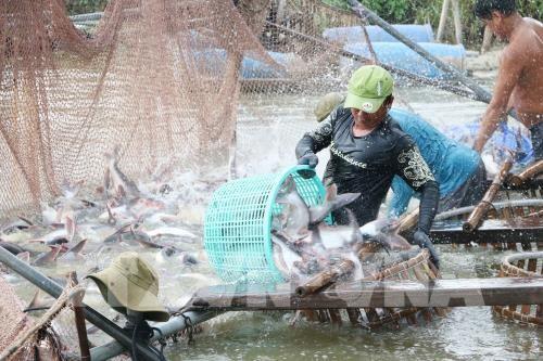 Vietnam promotes farm product export to China - ảnh 1