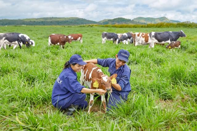 Vinamilk on the way to develop Vietnam's dairy industry - ảnh 1