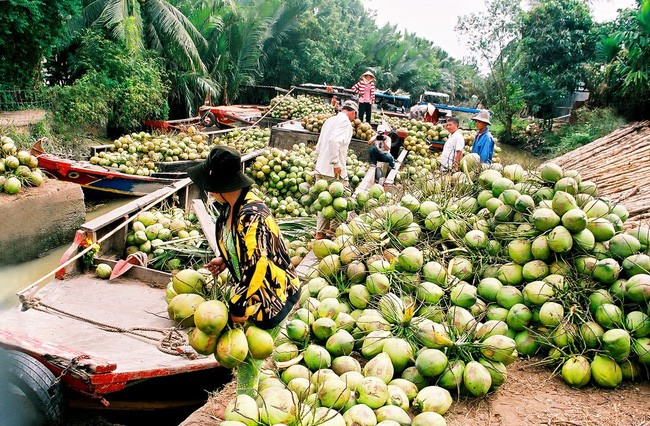 Ben Tre Coconut Festival to open in November - ảnh 1