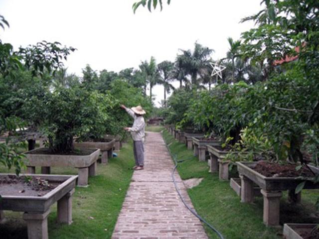 Vi Khe ornamental tree village - ảnh 1