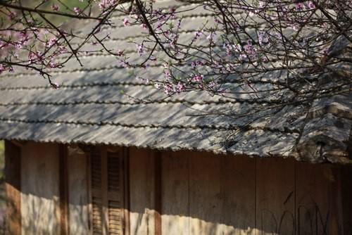 Môc Châu, un plateau fleuri toute l'année - ảnh 1