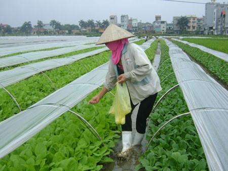 Himpunan Tani Vietnam menjadi poros dalam gerakan pembangunan pedesaan baru - ảnh 3