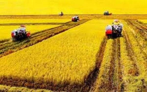 Memperhebat Penerapan Teknologi Informasi Pada Bidang Pertanian Di
