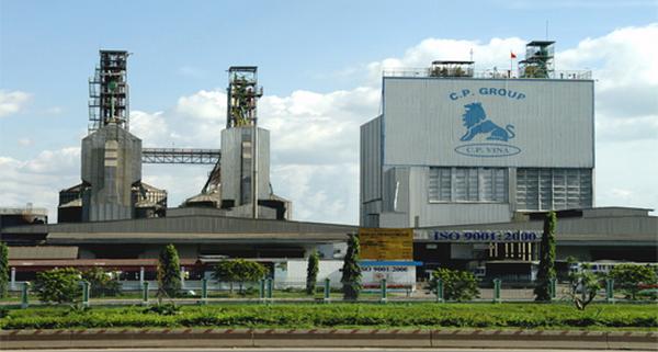 Perusahaan CPV-Pola produksi pertanian yang sukses di Vietnam - ảnh 1
