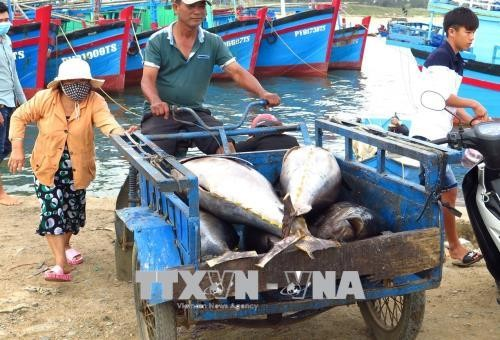 CPTPP menimbulkan pengaruh positif terhadap kaum tani dan nelayan - ảnh 1