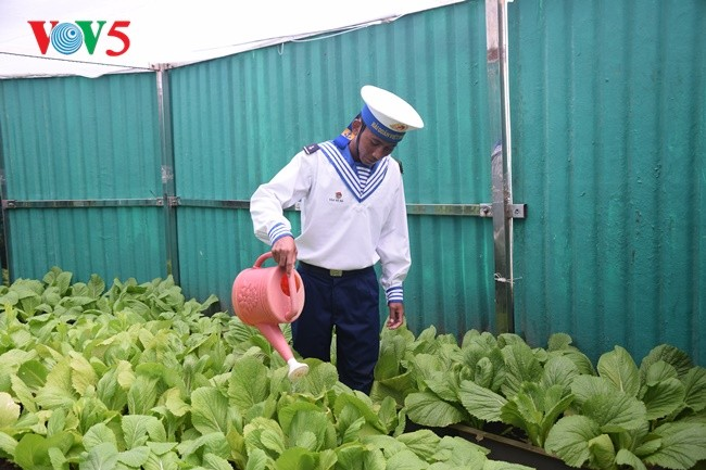Phan Thanh Sang-Pemuda yang tipikal dalam melakukan pembibitan benih hijau untuk laut dan pulau kampung halaman - ảnh 2