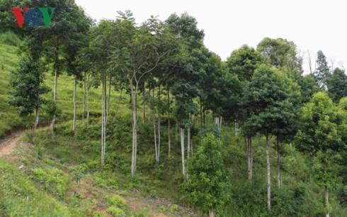 Warga Kabupaten Muong Ang, Provinsi Dien Bien lepas dari kemiskinan karena modal pinjaman dari Bank Kebijakan Sosial - ảnh 1