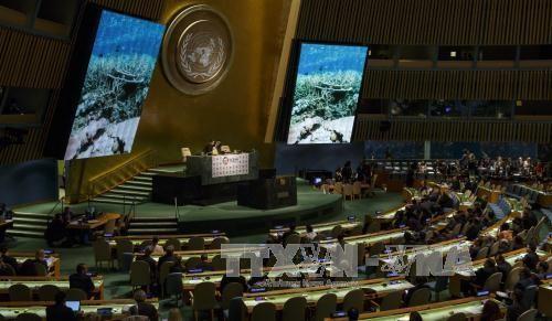 ONU brinda expectativas sobre la protección del entorno oceánico - ảnh 1