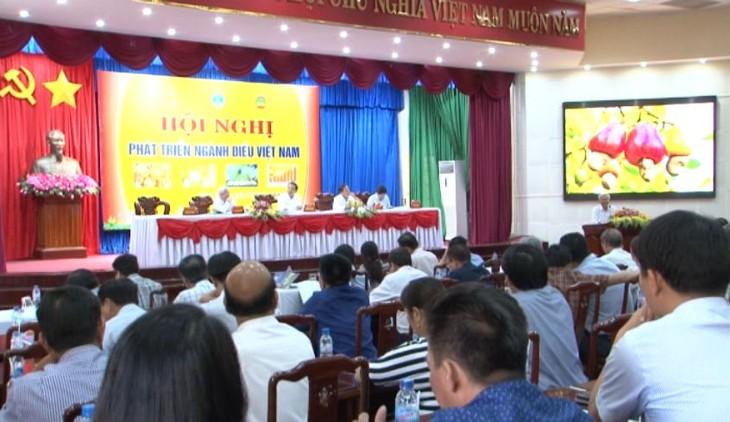 Agricultura de Binh Phuoc concentrada en el cultivo de anacardos - ảnh 1