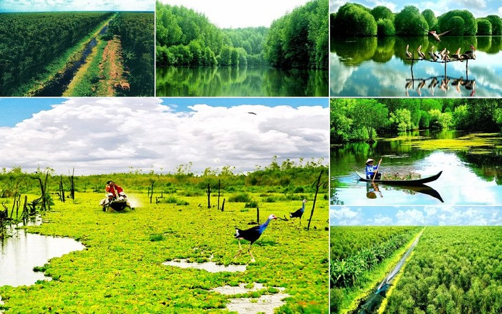 Zonas de preservación ecológica servirán para enfrentar al cambio climático en Vietnam - ảnh 1