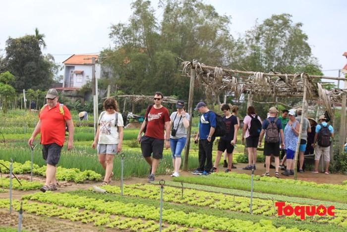 Crece flujo de turistas extranjeros a Vietnam - ảnh 1