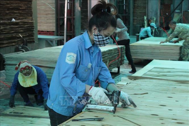 Exportaciones silvícolas de Vietnam prevén alcanzar más de 9 mil millones de dólares este año  - ảnh 1