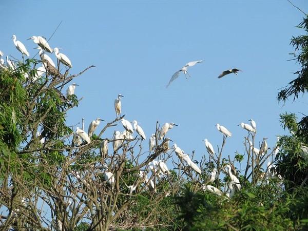 Isla de cigüeñas Chi Lang Nam: encanto atractivo del norte de Vietnam - ảnh 1