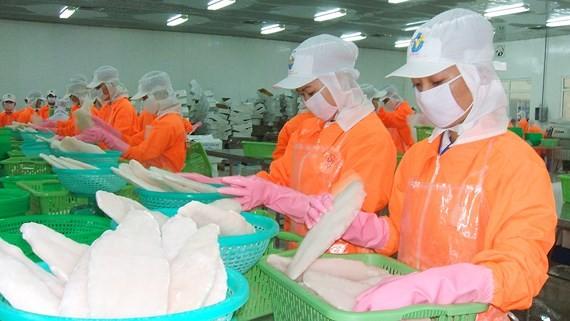 Vietnam planea ingresar más de 2 mil millones de dólares de exportaciones de pescado Tra en 2019  - ảnh 1