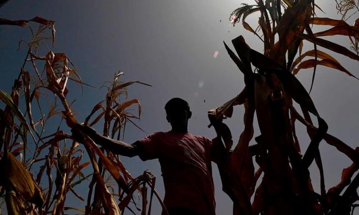 El cambio climático afecta a campesinos y pescadores de Guatemala - ảnh 1