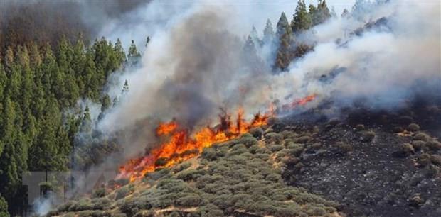 España controla incendio en la isla de Gran Canaria - ảnh 1