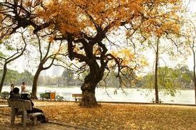 ハノイの秋口の美しさを描いた歌 - ảnh 1