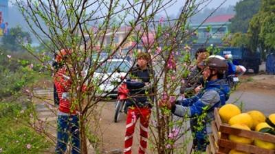 ラオカイ省、花市でにぎわう - ảnh 1