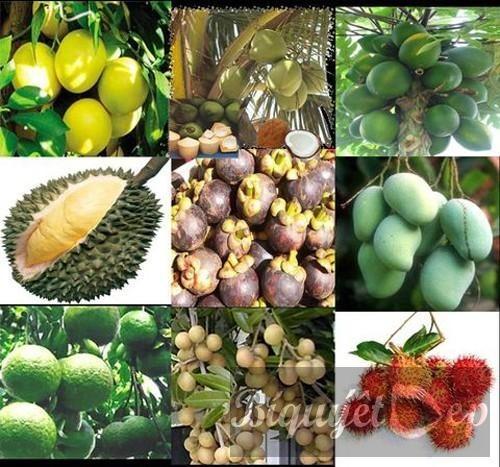 メコンデルタの果物の輸出促進 - ảnh 1