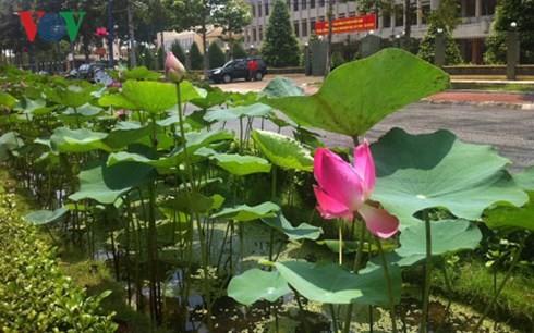 ドンタップ省の観光発展に役立つハス池風景 - ảnh 2