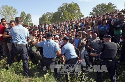 スイス、難民1500人受け入れ表明  - ảnh 1