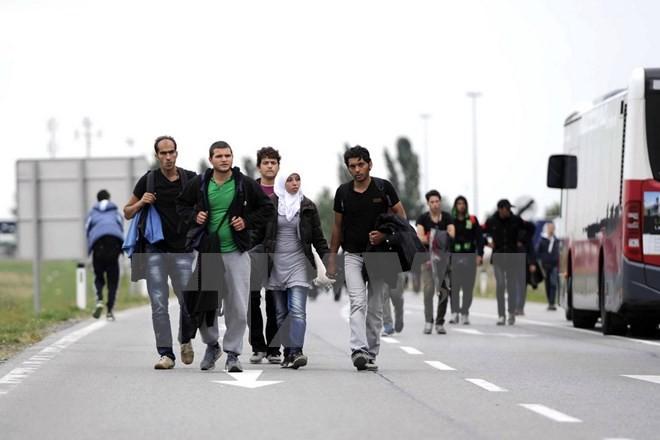 欧米のサッカークラブ 難民支援の寄付呼びかけ - ảnh 1