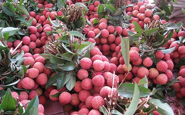 ライチ輸出を促進するバクザン省