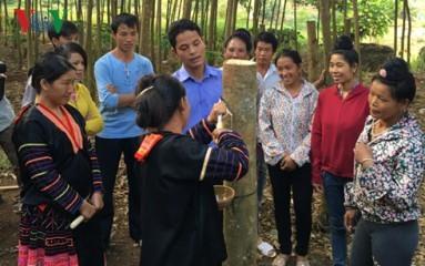 デェンビエン省ゴムの木育てによる貧困解消 - ảnh 2